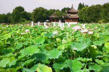 杭州湘湖荷花庄。
