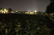 济南的大明湖,在7月的时光里分外妖娆