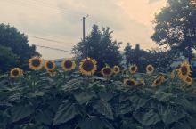 炎热的夏天,来自田园间清新