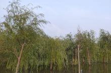 雨后的湿地公园