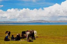 藏北高原的植物在那么恶劣的环境下如何生存?面对这种恶劣的环境,植物一般都是将自己变矮、甚至贴着地面生