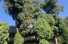 全金丝楠木