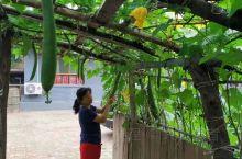 #田园生活#旅游归来回归田园,打理菜园,采摘蔬菜