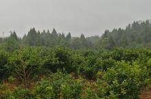 人家来四川重庆欣赏大自然的美,而我是来感受大自然的无情。