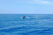 【美瑞莎观鲸】 据说斯里兰卡是全世界最好的观鲸地点 费用:船票是6500LKR/人,但是因为我们去的