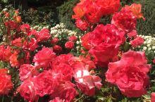 波特兰玫瑰花园