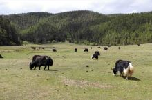 香格里拉普达措国家公园 每个人心中都有一个香格里拉 第一次去香格里拉是蓄谋已久的一次旅行。彼时工作上
