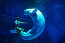 上海海昌海洋公园有大量丰富的表演,都非常精彩。海象嘻游记,白鲸之恋,海豚奇缘,还有虎鲸科普秀是最受欢