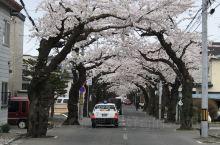 搜攻略的时候发现这条樱花之路 在柏木町站附近 还是挺惊艳的