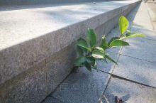 在重庆花卉园看见的 多么顽强的小草 似乎学到了一点什么 感谢生命中有你