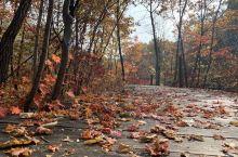 天桥沟离老边沟很近,但是枫叶变色比老边沟晚5~6天,12号去老边沟的时候大部分枫叶掉落了,17号去天