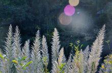 【山林中,寻找秋色】斑斓的秋色总是充满诱惑,这个时候,南方内地大多叶未红,银杏也未黄。但耐不住,趁着