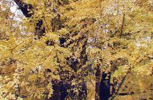 老话讲:先有潭柘寺,后有北京城。秋风瑟瑟中,潭柘寺也迎来了秋天最绚丽的景色。距今已有1400年历史的