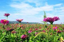 天物一体,巧夺天工,蓝天白云,鲜花盛开