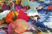 在这里, 无需牵绊, 只需漫步在金色的时间里。 远处,空山鸟鸣, 眼前,万千秋色, 转角,秋天满地。