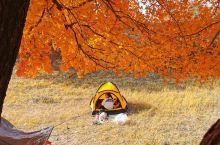 秋色满满~