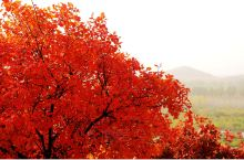 2019.10,北京顺义白毛峪,舞彩浅山郊野公园。