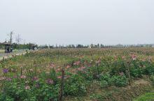 枫林花海~常德人的室外桃园之一 来这里是和我舅舅他们一起过来玩,这里的风景很美丽。以前就听过这里,只