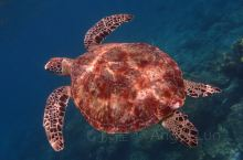 潜水天堂|仙本那最高端的双岛一酒店|马达京彩珊瑚度假村  在马来西亚沙巴州有这样一个美丽地方,它叫仙