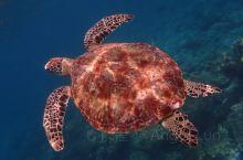 潜水天堂 仙本那最高端的双岛一酒店 马达京彩珊瑚度假村  在马来西亚沙巴州有这样一个美丽地方,它叫仙