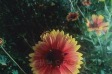 强行摆正的小花