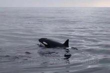 卡特琳娜岛 潜水圣地 很多鱼也有鲸鱼 和海豹