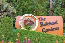 加拿大维多利亚的布查特花园(The Butchart gardens),20190808