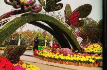 光谷生态园菊花展