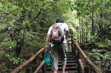 屋久岛、苔藓森林