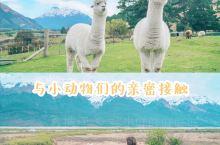 新西兰格林诺奇牧场   和小动物们的亲密接触  来新西兰之前,就一直心心念念着要来当地的牧场撸小动物