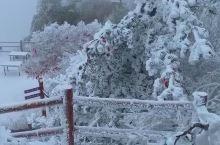 老君山的雪景,到处都是一片银装素裹