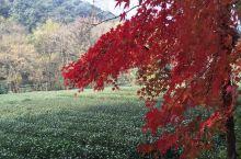 杭州九溪的秋