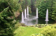 温哥华岛的布查特花园的艳丽世界知名。可以在阳光明媚的环境下去欣赏她当然是福气。但是在密云微雨中去揭开