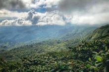 蒙特贝尔德云雾森林景区----人间天堂,百鸟乐园  蒙特维多云雾森林保护区(monteverde)是