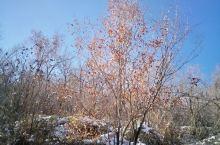 雪与水的世界,树与草的交流。