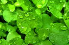 要想生活过得去,总得有点绿才行。 工作累了,呼吸下新鲜空气,给自己放松一下