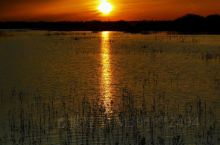 内蒙阿拉善盟额济纳旗的居延海湿地公园,大自然的本色就是绝美的图画,当夕阳时分,随着太阳敛去她耀眼的光
