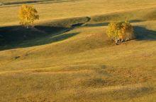 乌兰布统的点和线。这个美丽的草场上,树木的生长很有特色。从高处,用长焦镜头拉近来拍,有的孤零零地,一