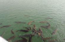 昆仑湖公园是和田市区的最大公园,以湖水为主!