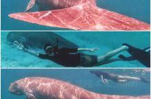 菲律宾 科隆岛  潜水-这个憨憨就是美人鱼原型  提到美人鱼,大家脑海里面一定闪过的是人身鱼尾,长发
