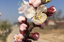 春暖花开3