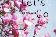 春暖花开,找个地方踏青吧!湘湖赏花攻略 离家不远的湘湖景区,就是个不错的选择,现在有1,2,3期,可