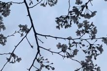 《来自焦作的诱惑:我真的想要去旅游……》  我是孤独浪子,希望我的拍拍让您有所收获。 漫游神州31载