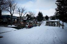 旭川·北海道  去北海道一定要去一趟旭川动物园,札幌乘车一个多小时到旭川站,出门右手边购动物园往返B