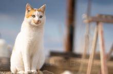 猫奴此生必去,濑户内海的幸福猫岛◎真锅岛 这里是一座位于在濑户内海上,属于冈山县的小岛,生活在此的总