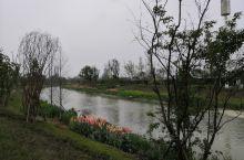 长流河湿地公园越来越美了