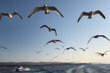 湖面与海鸥竞跑