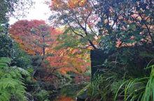 新西兰之旅第二天,一个免费的花园,修建的非常精致,但是没有惊艳的感觉,适合早晚散步溜溜,专程来一趟就