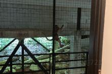 皮皮悬崖酒店,喂猴子吃花生。