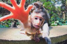 猴几盆友 你想做咩